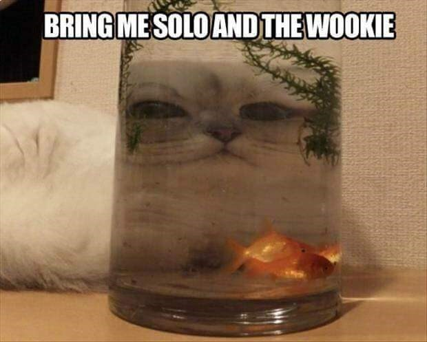 star wars caption Cats - 8996323840