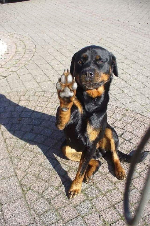 paws stop - 8996336384