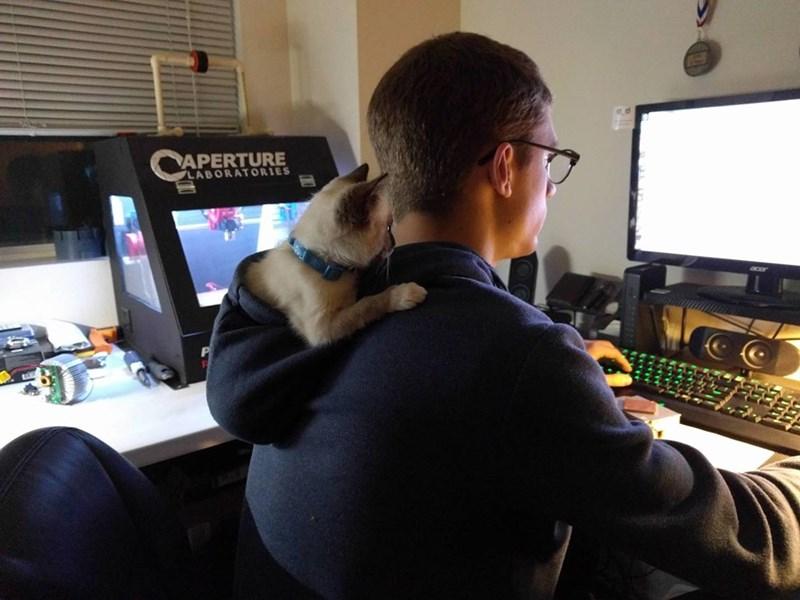 hoodie if i fits i sits Cats - 8996337152