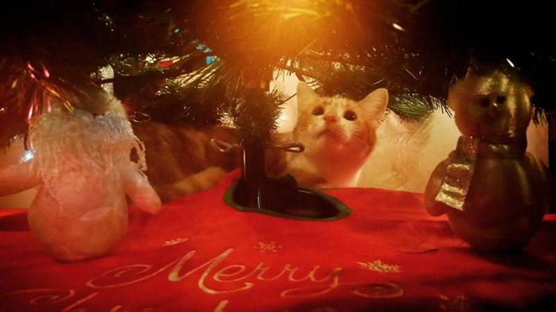 christmas,christmas tree,Cats