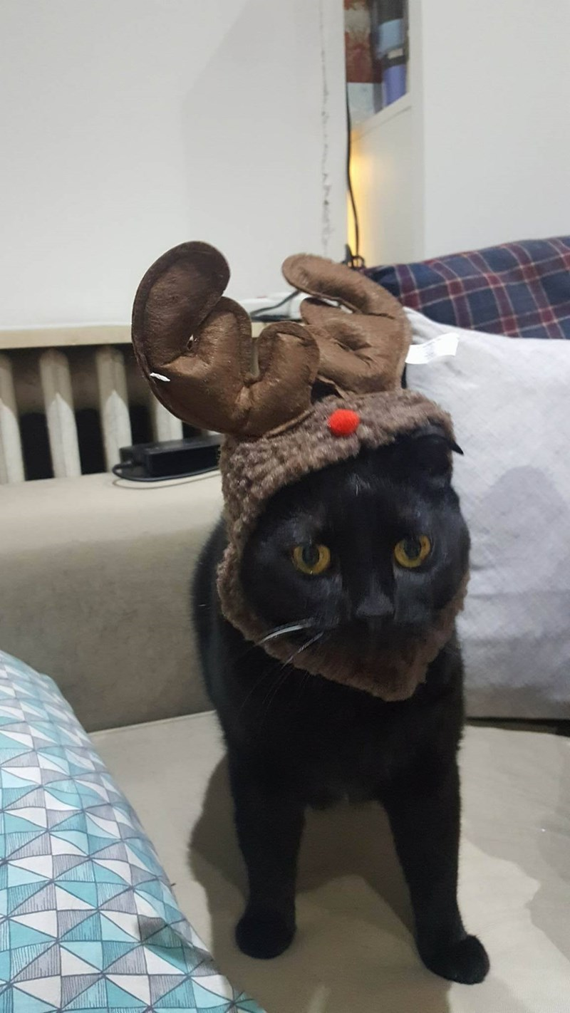 basement cat,reindeer,Cats