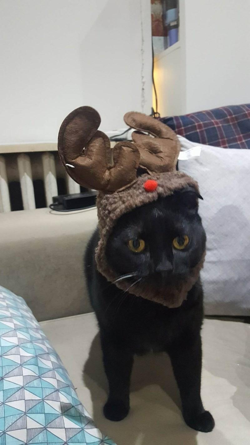 basement cat reindeer Cats - 8996480000