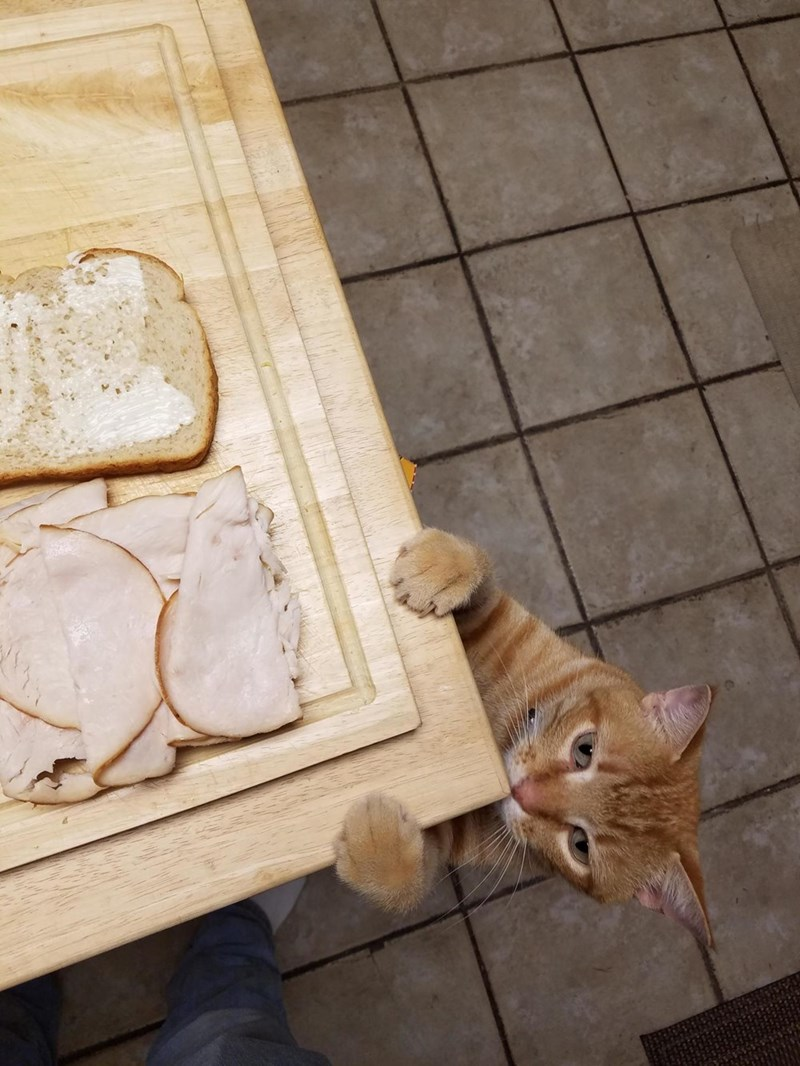 Turkey,begging,Cats
