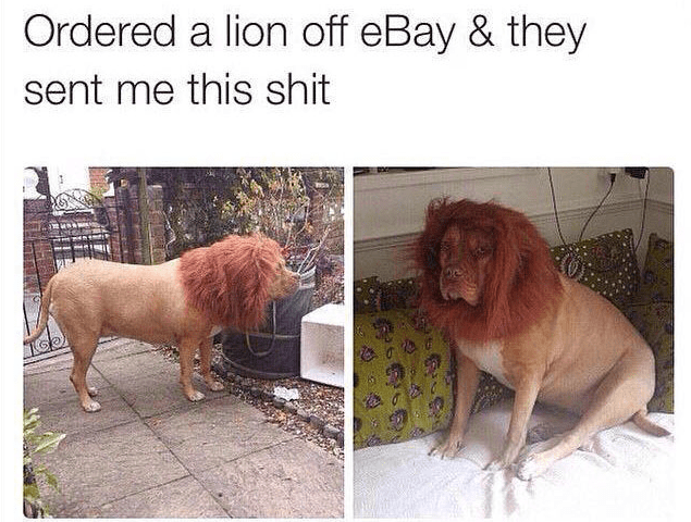 Dog - Ordered a lion off eBay & they sent me this shit
