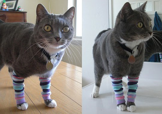 fashion leg warmers Cats