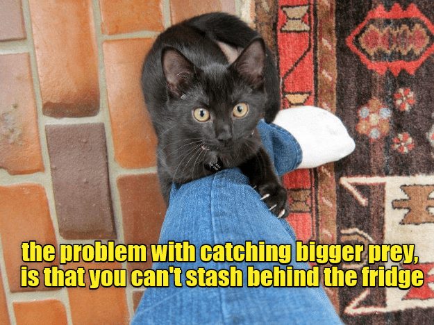 cat,catching,stash,problem,prey,caption,fridge