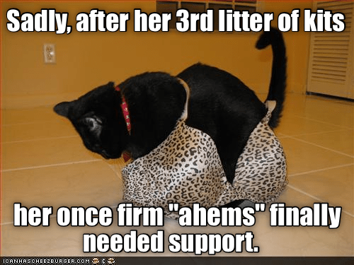 kits ahems 3rd Caturday support caption litter - 8996789248