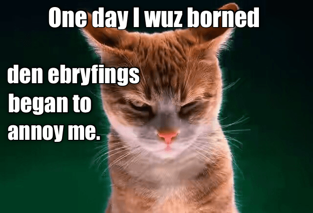 cat,borned,ebryfings,annoy,caption