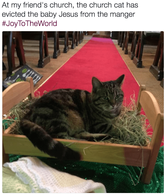cat steals manger tweet lol