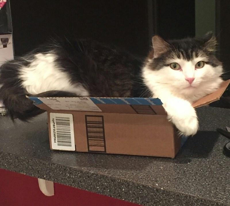 box if i fits i sits Cats - 8996955648