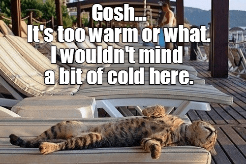 cat too cold mind caption wouldnt warm - 8996990720