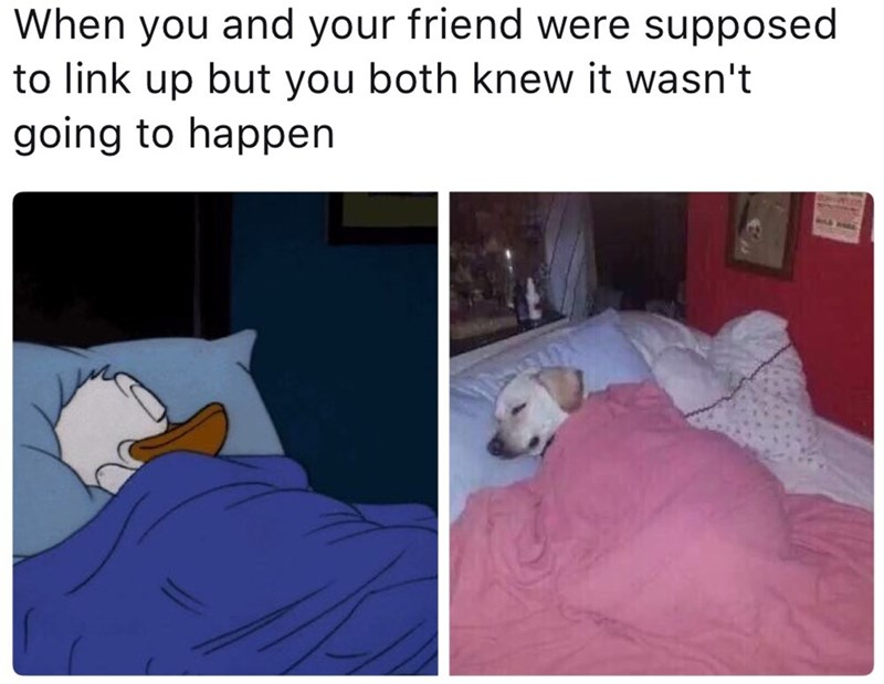 friends,Memes,sleeping,image