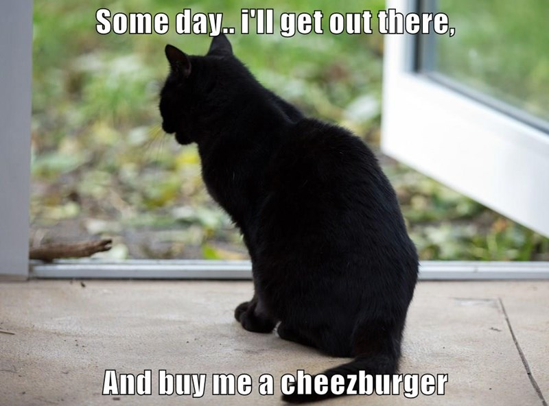 Some day.. i'll get out there, And buy me a cheezburger