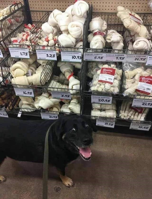 dogs bones