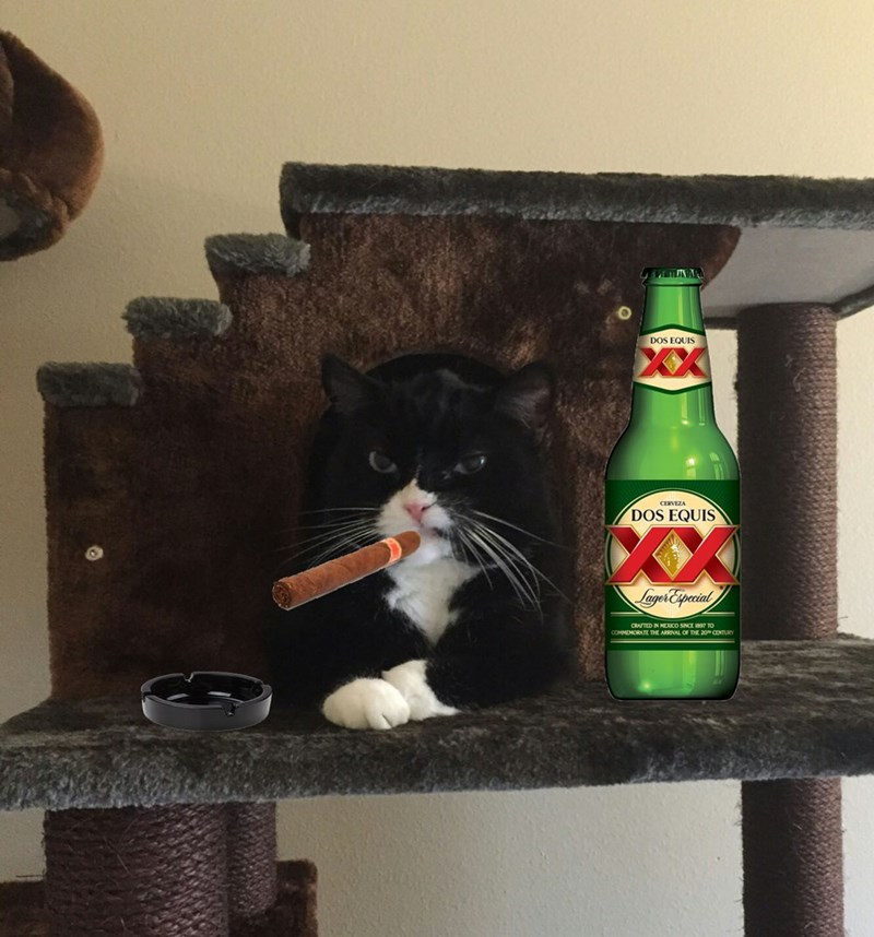 Cat - DOS EQUIS CERVEZA DOS EQUIS XX LagerEspecial CRATED IN MEICO SINCE 1897 TO CENTURY COMMEMORATE THE ARRINAL OF THE 20