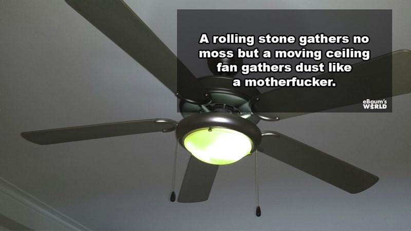 Ceiling fan - A rolling stone gathers no moss but a moving ceiling fan gathers dust like a motherfucker. eBaum's WERLD