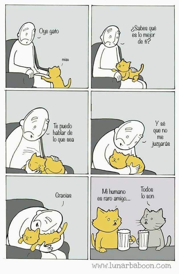 bromas viñetas animales - 8997189632