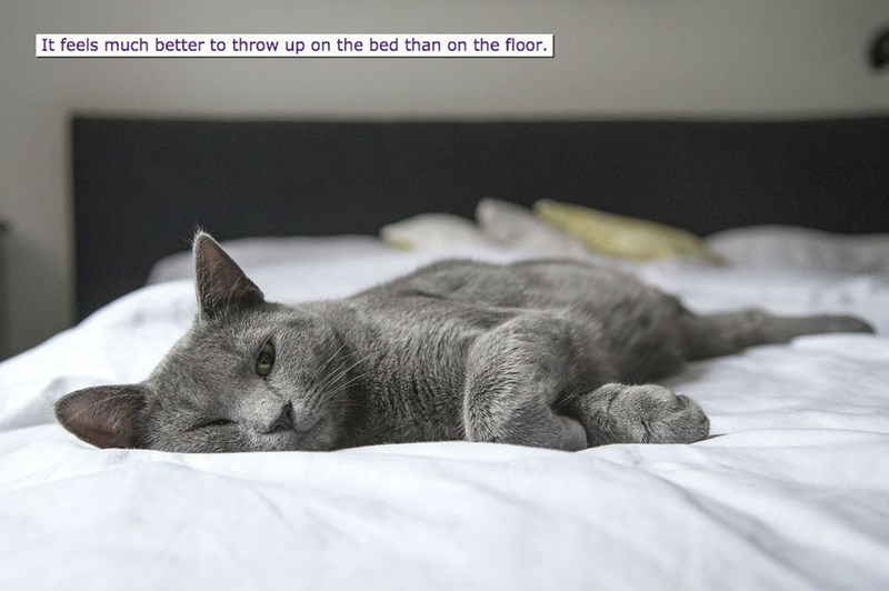 Cat - It feels much better to throw up on the bed than on the floor.