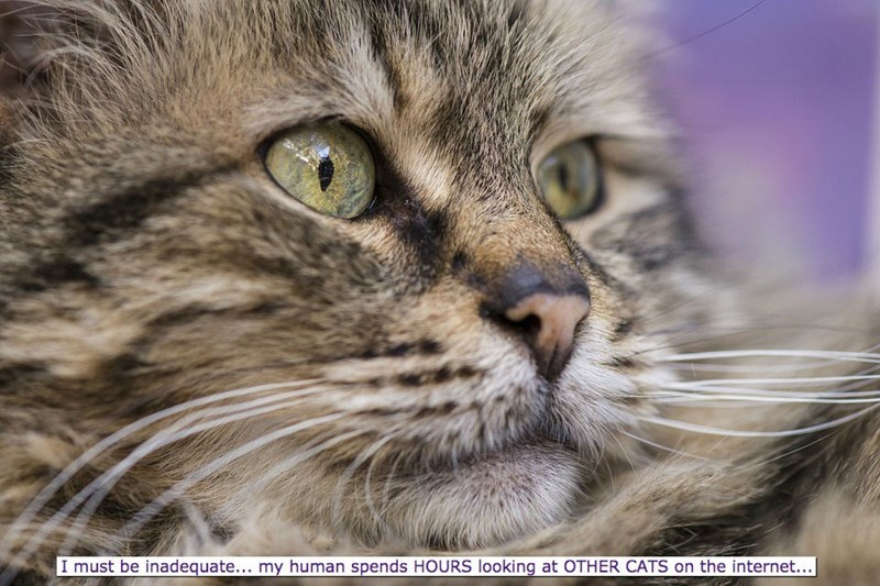 Cat - I must be inadequate... my human spends HOURS looking at OTHER CATS on the internet...|