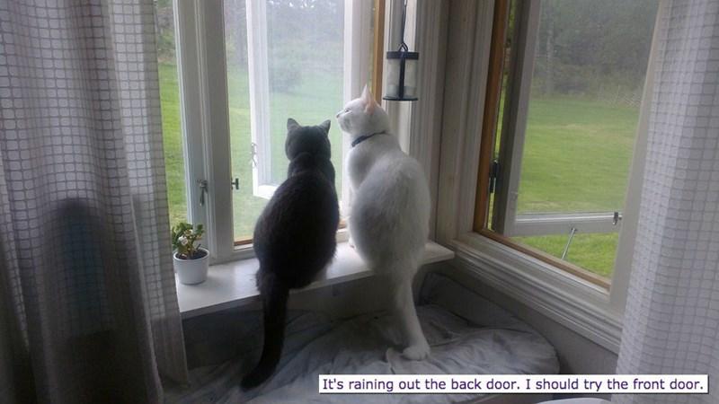 Cat - It's raining out the back door. I should try the front door.