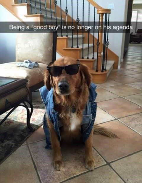 dogs snapchat bad boys - 8997406976
