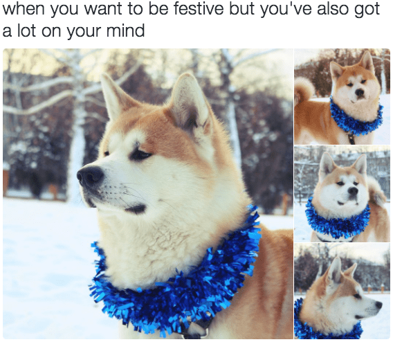 pensive festive doggo tweet
