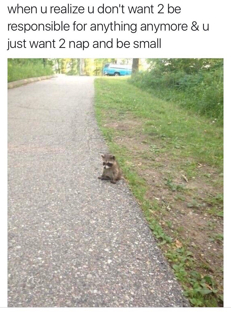 Sad racoon image - 8997576448