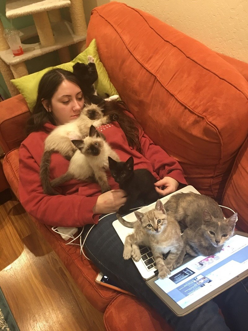 crazy cat lady,kitten,Cats