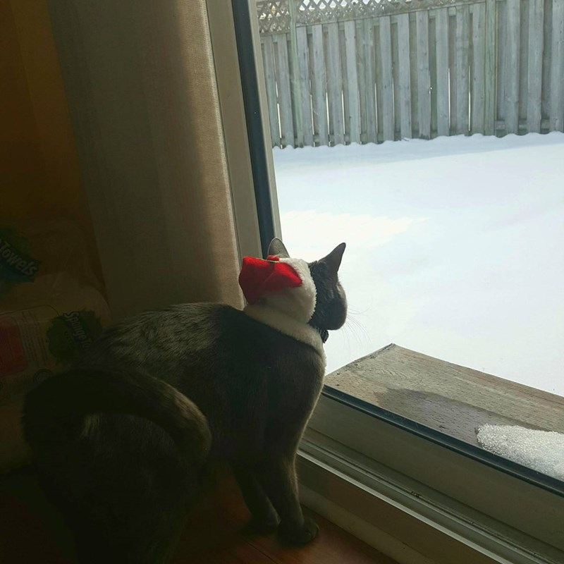 snow,Cats,santa hat