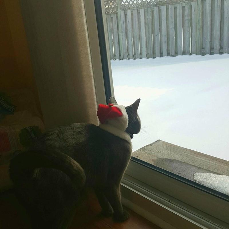 snow Cats santa hat - 8997591808