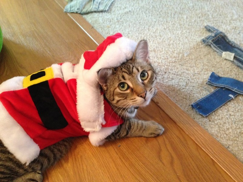 santa Cats - 8997616896