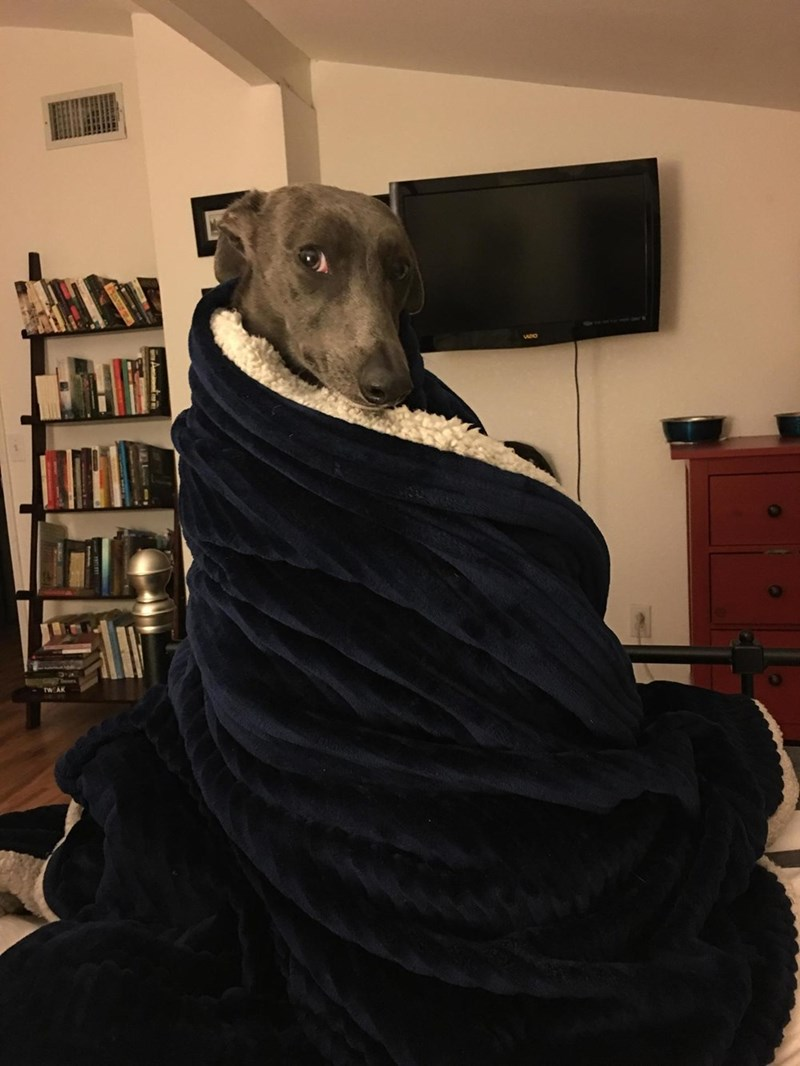 Jon Snow,dogs,blanket