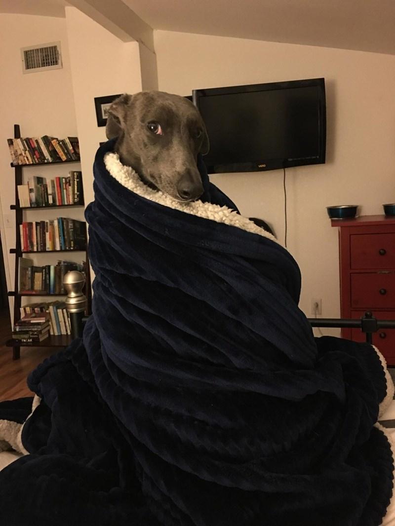 Jon Snow dogs blanket - 8997617920