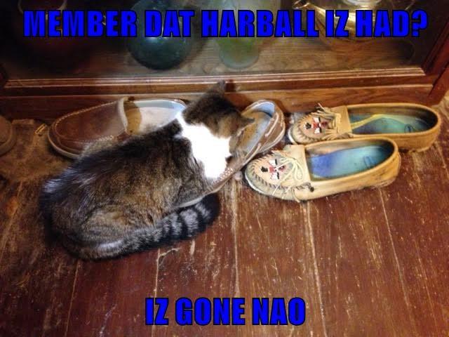 cat caption hairball gone remember - 8997660672
