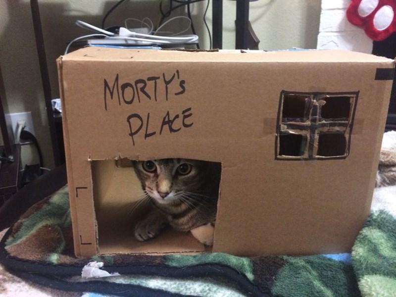 cardboard box,Cats