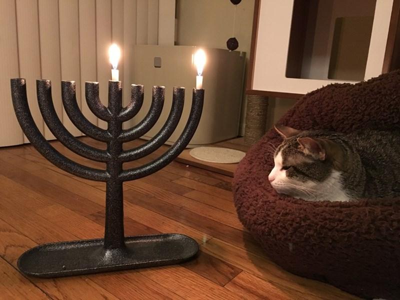 hanukkah Cats - 8998101248