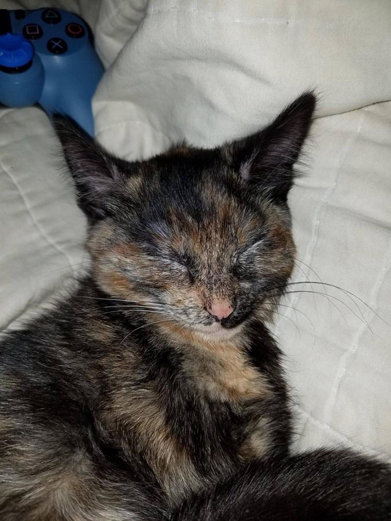 Cats sleeping catnap - 8998102016