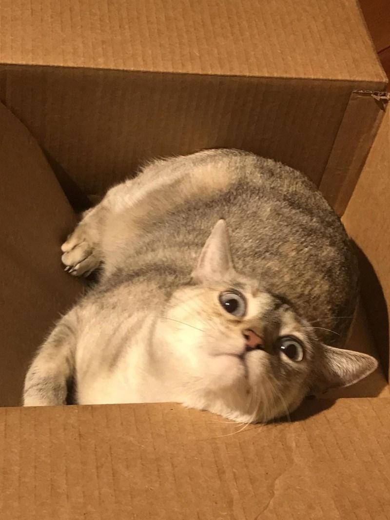 box lol Cats - 8998102272