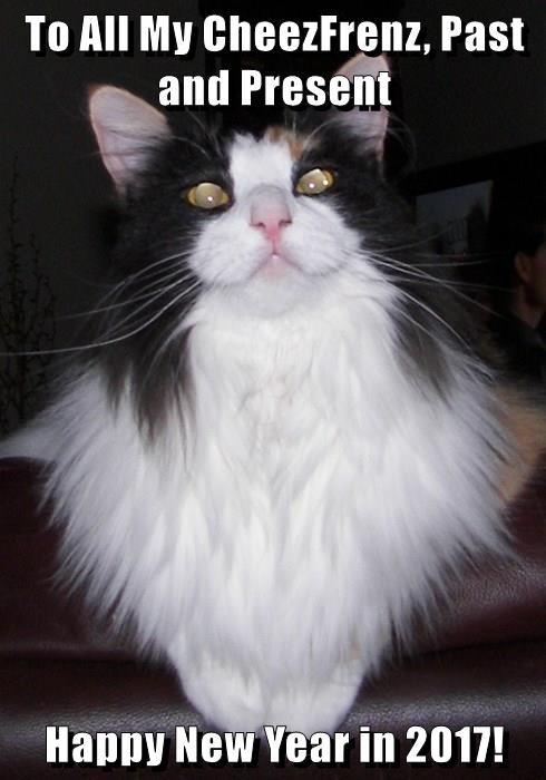 cat cheezfriends happy new year caption - 8998321408