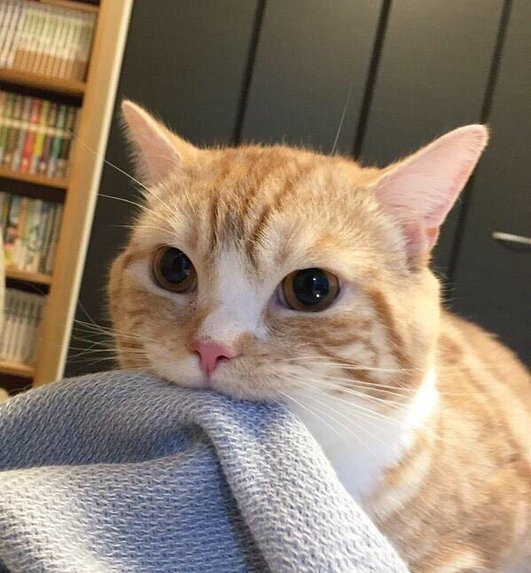 blanket noms Cats - 8998398720