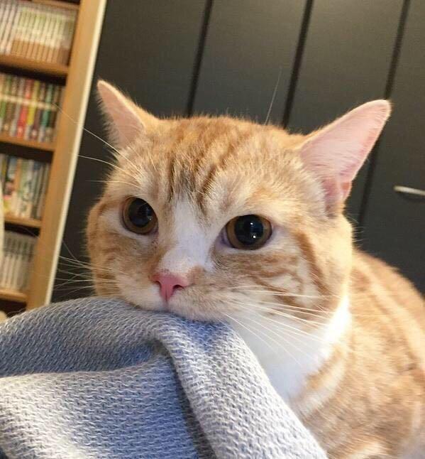 blanket noms Cats - 8998398720