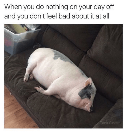 day off pig image - 8998441984