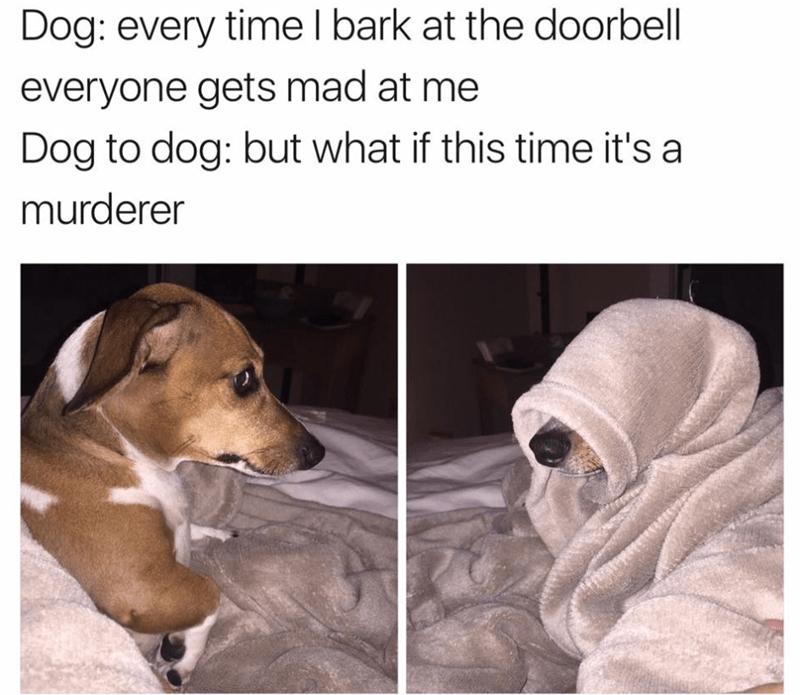 dogs,Memes,evil kermit