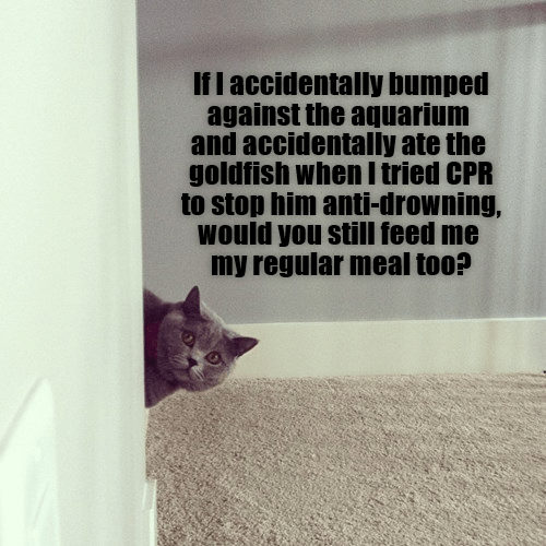 cat cpr aquarium caption bumped accidentally