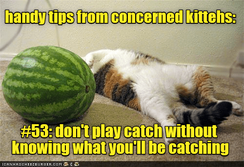 cat tips catch handy play dont caption - 8998562304