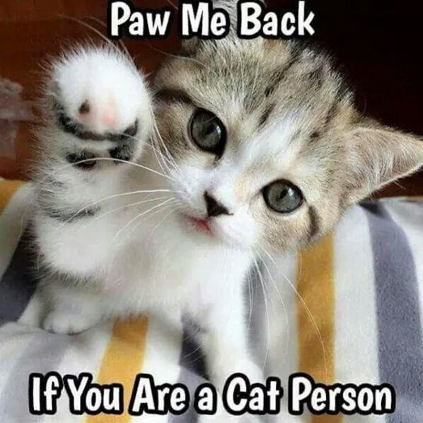 paws caption Cats - 8998609664