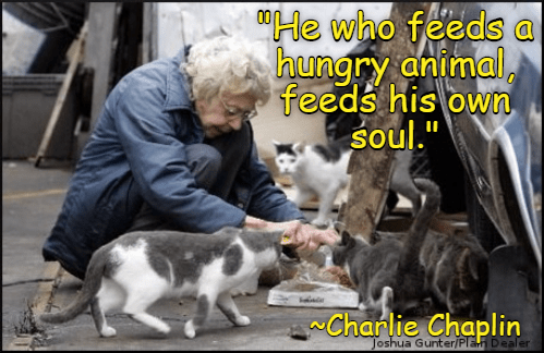 charlie chaplin hungry soul feeds he caption animal Cats - 8998611200