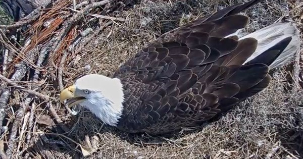 southwest eagle cam goes live on youtube with bald eagle nest footage