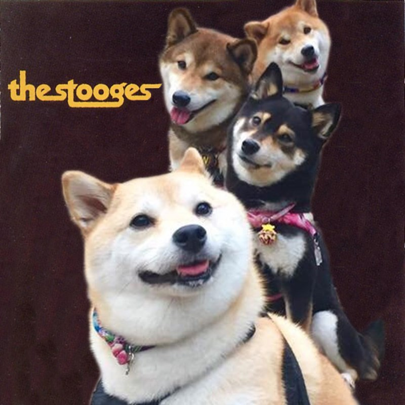 Dog - thestooges