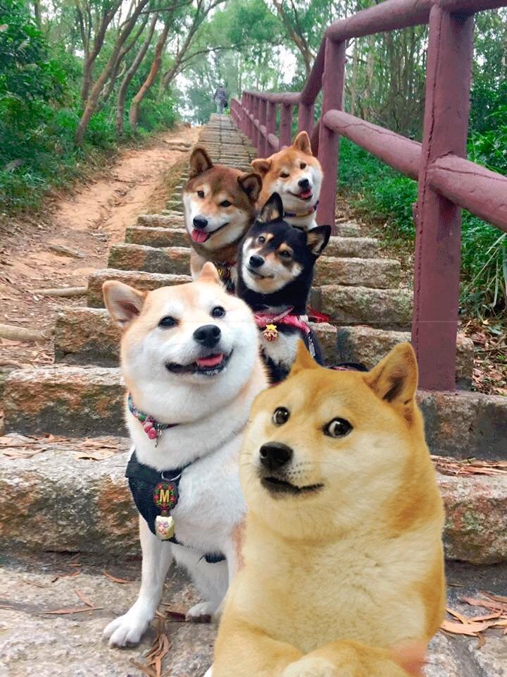 Dog - M